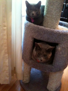 Sharing the treehouse!