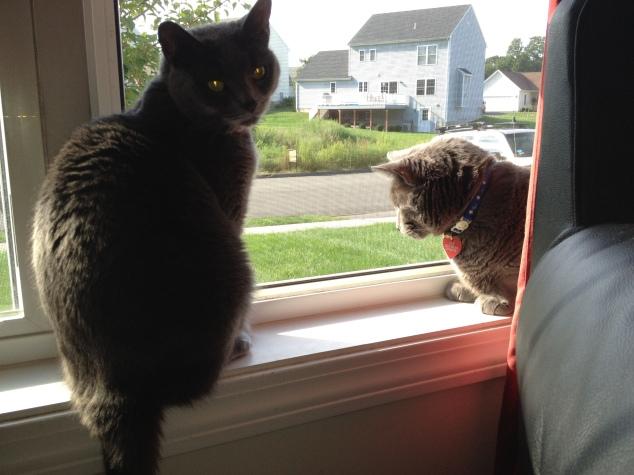 The kitties enjoying fresh Spring air.