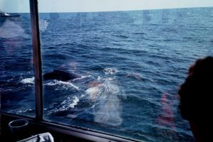 An incredible adventure - Whale Watching off the coast of Boston, MA.
