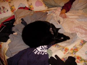 Mackenzie (RIP) used to wait for my husband to lay out the shirt he had just worn, and then lay on it.