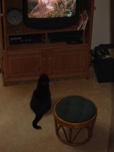 Mackenzie (RIP) watching Animal Planet.