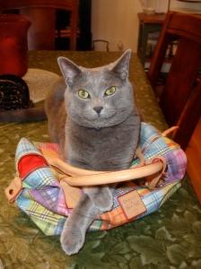 Milo is such a fashionisto!