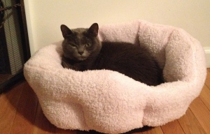 Molly's new Pink bed in front of the fireplace.