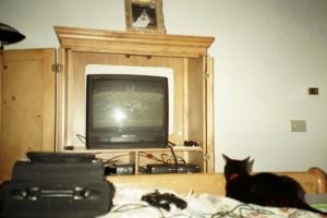 Mackenzie (RIP) watching ESPN.