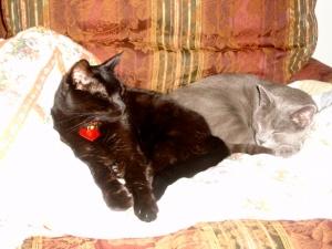 Snuggly kitties!